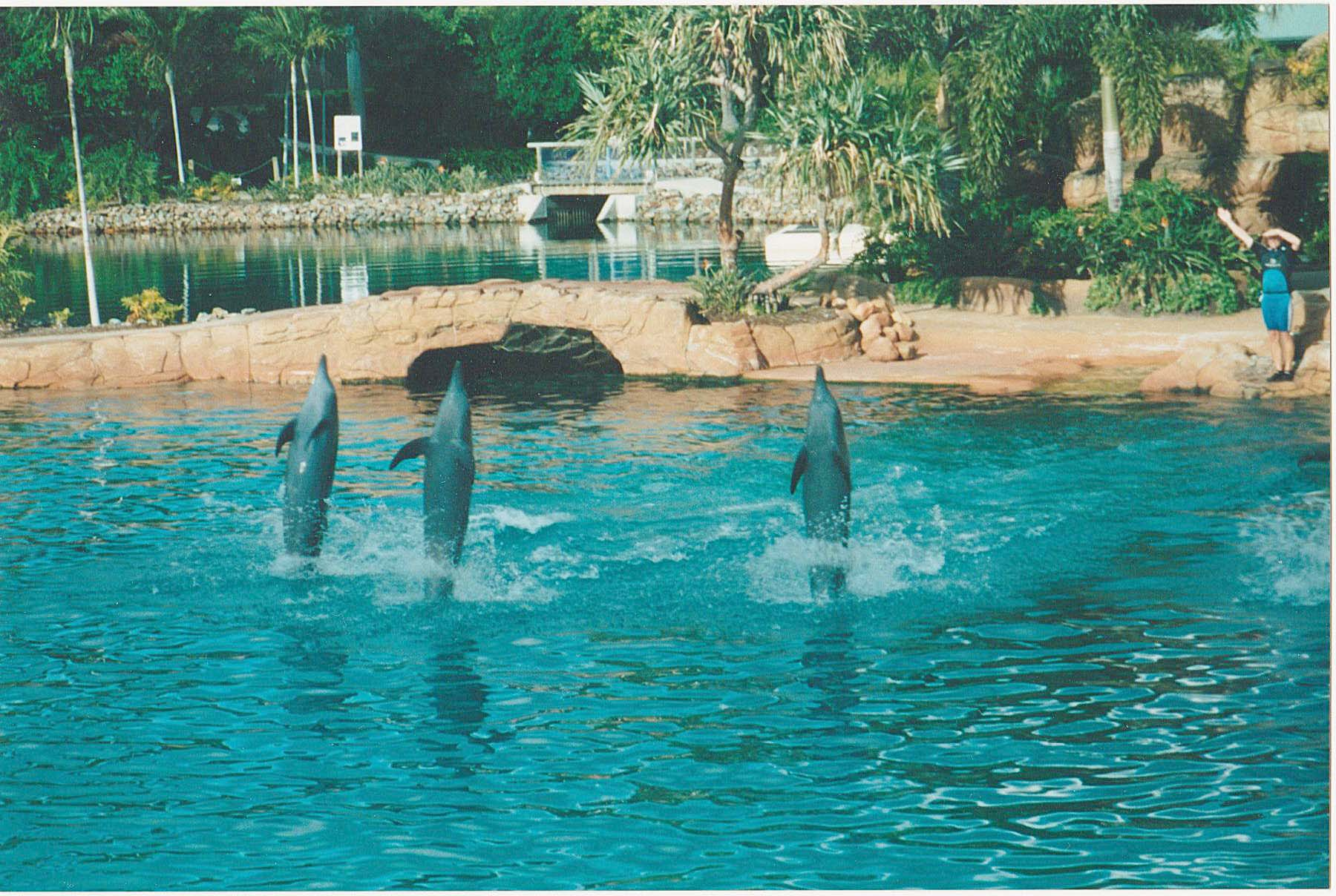 film dolphins