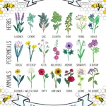Plants which help bees